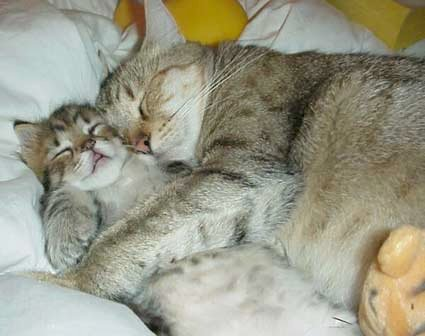 two cats having a hug